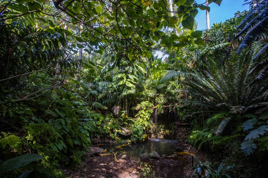 Beauty Sunken Garden