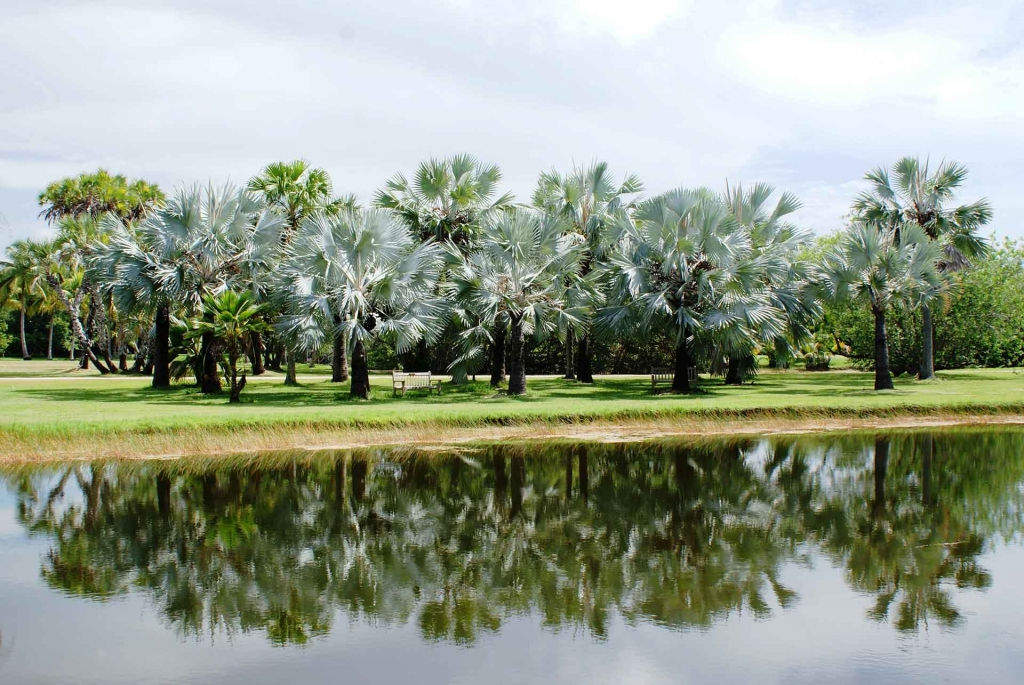 DailyView Palms in Lowlands