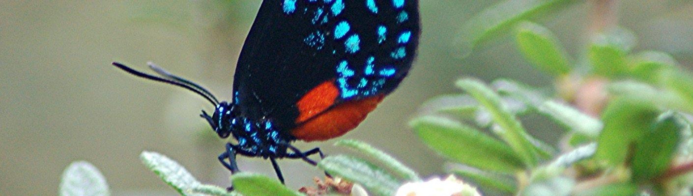 Lisa D. Anness South Florida Butterfly Garden - Fairchild ...