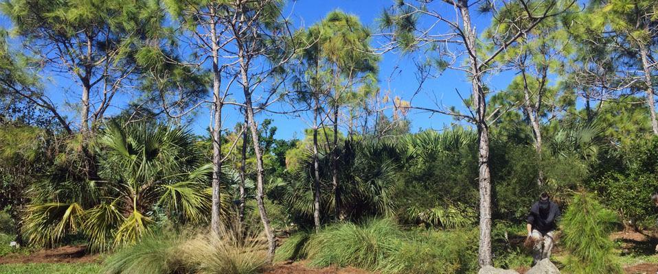 Pine rockland garden