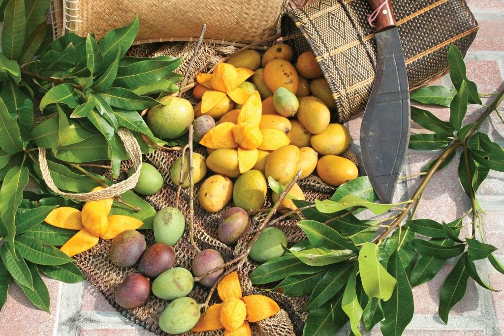 Wild mangos harvested at the Fairchild Farm