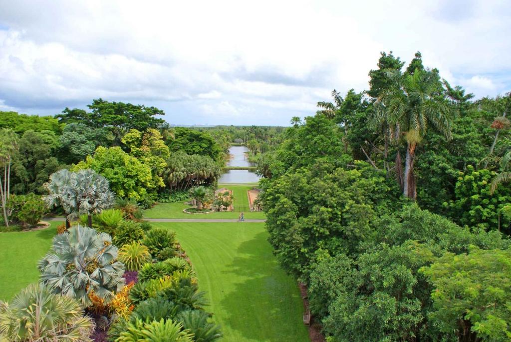 Bailey palm air view
