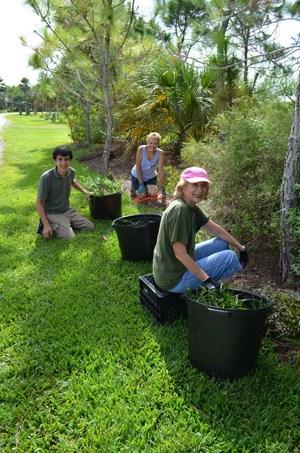 Volunteering-Horticulture