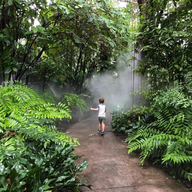 Journey through the clouds and discover the Rainforest! 💚 #wonder #cloudforest #fairchildtropicalbotanicgarden #rainforest #adventure #beautifulplaces #gardenlife