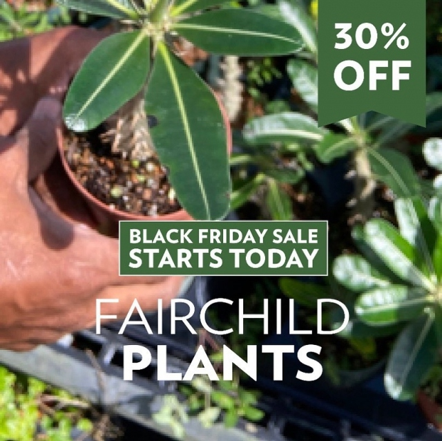 It's the Greenest Black Friday Sale of the Year!💚 Transform your home garden or give the gift of a Fairchild plant to someone you love! 😊 Use promo Code CYBER2020 to receive 30% off your order! 🌱 Link in bio. 😃