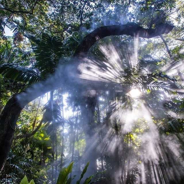 Have you ever been to the rainforest?  Travel through a veil of mist as you discover the wonders of a tropical rainforest right here at Fairchild. 💚🦋 . #fairchildtropicalgarden #beautifulplaces #thetropics #fairchildgarden