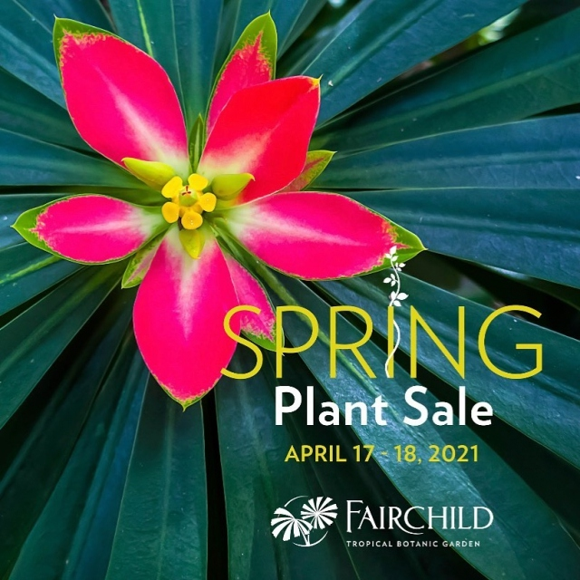 What better way to celebrate Spring in Miami than by spending a weekend at Fairchild buying new plants for your Garden! 💚 South Florida's best plant vendors, plant societies, and artisans will all be at the Garden for all of your home gardening needs. 💚 . Link in bio for tickets.  Members enter free 😃